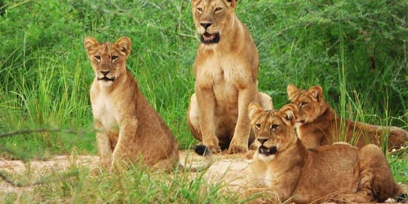 2 Day Akagera National Park safari